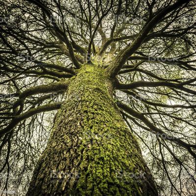 Les arbres ont un lien naturel avec les hommes découvrez leurs bienfaits